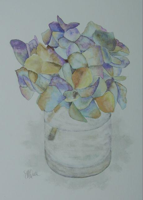 Hydrangea, Autumn