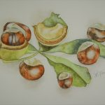 Convent Chestnuts 1